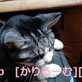 写真: 2018/12/01猫スズ(すず)の写真1812011920