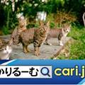 写真: 人と猫との穏やかな暮らしの為に地域猫活動に尽力する住人