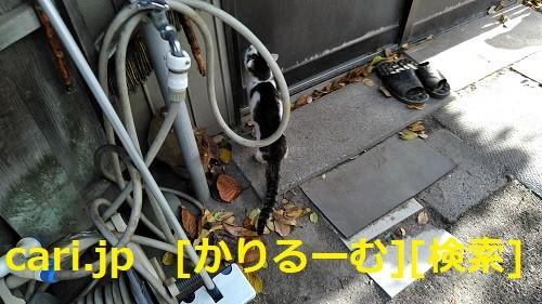 Photos: 2018/12/09 猫ハナ(はな)写真 KIMG0252