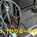写真: 2018/12/09 猫ハナ(はな)写真 KIMG0252