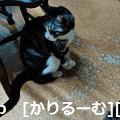Photos: 2018/12/01猫スズ(すず)の写真1812011944