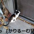 写真: 2018/12/09 猫ハナ(はな)写真 KIMG0253