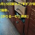 Photos: 2019年3月分 鈴木社長の備忘・日記 cari.jp