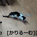 2018/12/10写真 猫ハナ(はな) cari.jp