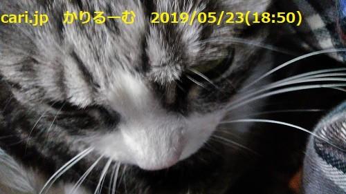 Photos: 二階建てバス 保護猫カフェひだまり号 cari.jp