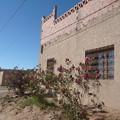 Roses house in desert