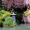 写真: フジのお庭