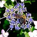 写真: 蜂と