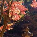 Photos: 秋の錦