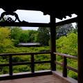 Photos: 通天橋の青紅葉