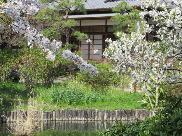 Photos: 春の座敷