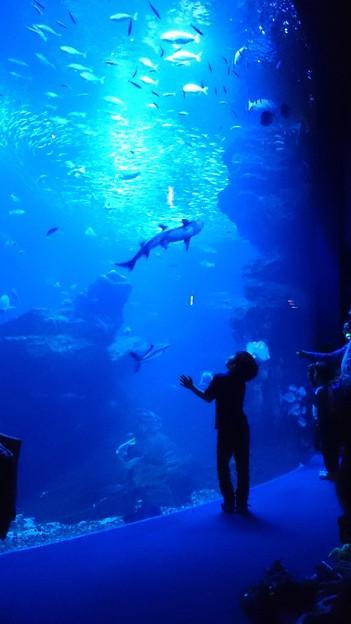 90日本-1鮫さん、大好きだよ