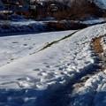 写真: いつもの散歩道ー2