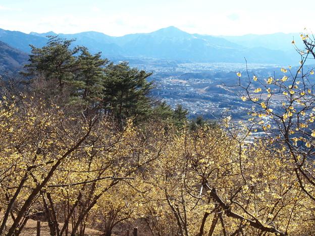 宝登山「ろうばい」