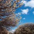 写真: 白梅に囲まれて