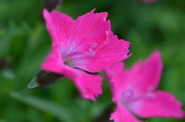 散歩道で咲く花ーA