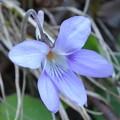 瑞牆山に咲く花