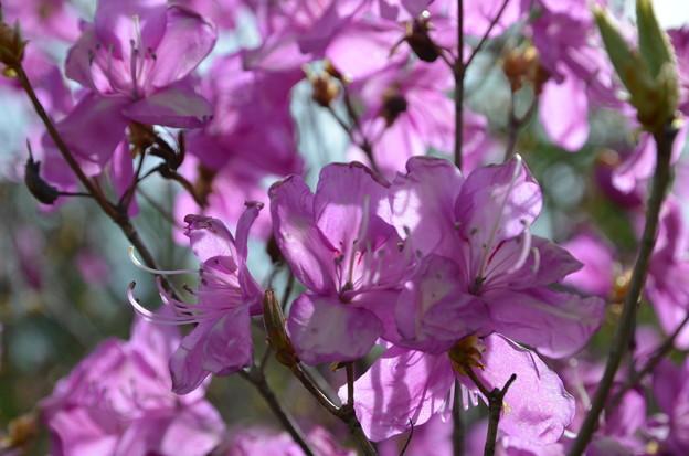 写真: 春のひと時