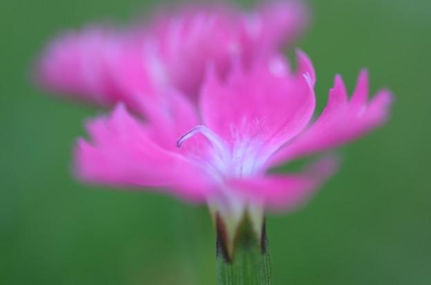 Photos: 散歩道で咲く花ーC