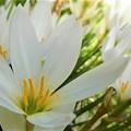 散歩道の白花ーB
