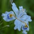 写真: 釈迦の花