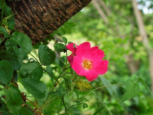 写真: 大木に寄り添う赤い花