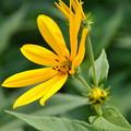 写真: 黄色の花
