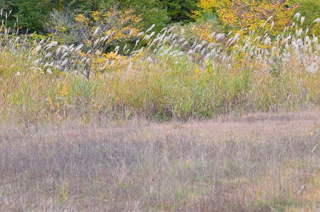 秋の林道へ