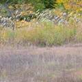 写真: 秋の林道へ