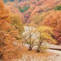 写真: わたらせ渓谷の秋