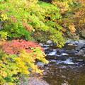 写真: 照葉峡の秋ーA