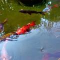 秋の池-2