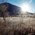 写真: 晩秋の戦場ヶ原「霜」