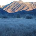 写真: 晩秋の戦場ヶ原「霜」ーB