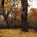 写真: 秋日和