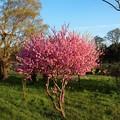 Photos: いつもの散歩道「春っらら」-2