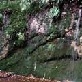 世田谷区 「不動の滝」