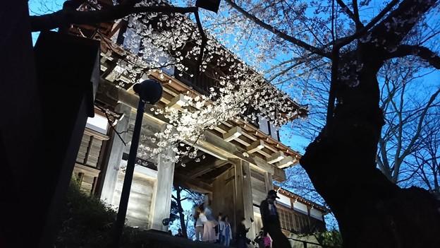 2018 秋田千秋公園 夜桜 09