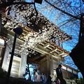 Photos: 2018 秋田千秋公園 夜桜 09