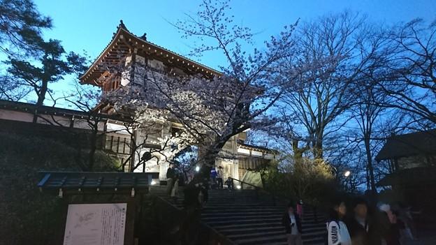 2018 秋田千秋公園 夜桜 10