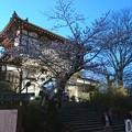 Photos: 2018 秋田千秋公園 夜桜 10