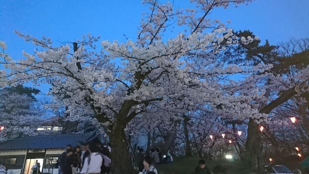 2018 秋田千秋公園 夜桜 13