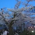 Photos: 2018 秋田千秋公園 夜桜 13