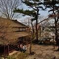 Photos: 千秋公園の桜 2018-04-22_8