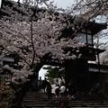 Photos: 千秋公園の桜 2018-04-22_9