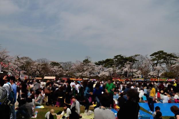 千秋公園の桜 2018-04-22_12