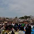 写真: 千秋公園の桜 2018-04-22_12
