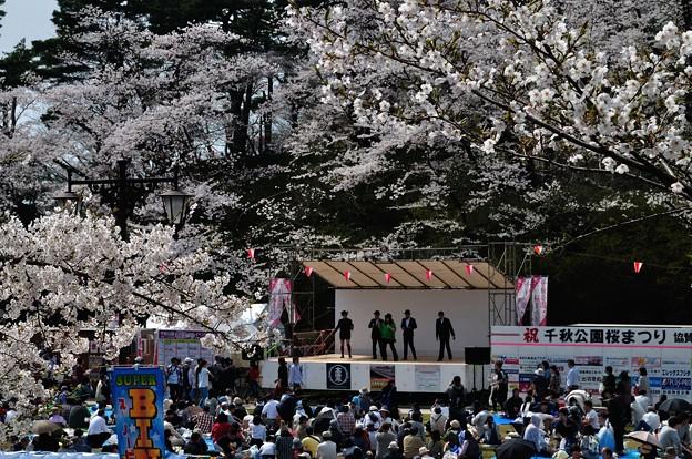 千秋公園の桜 2018-04-22_13