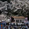 写真: 千秋公園の桜 2018-04-22_13
