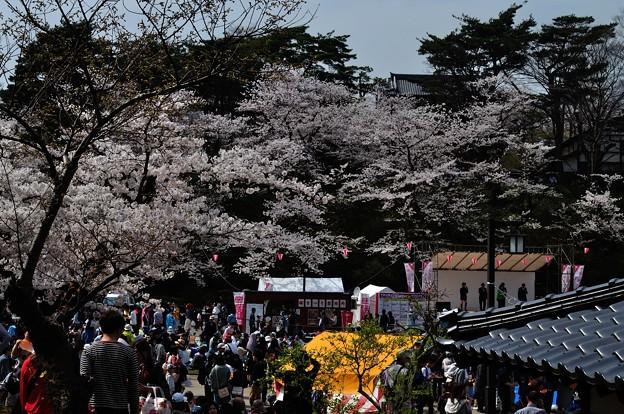 千秋公園の桜 2018-04-22_14